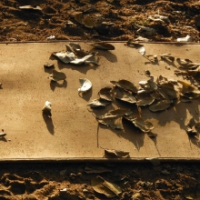 cork-yoga-mat-and-leaves